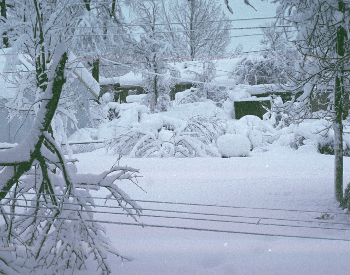 1993 Blizzard - Storm of the Century