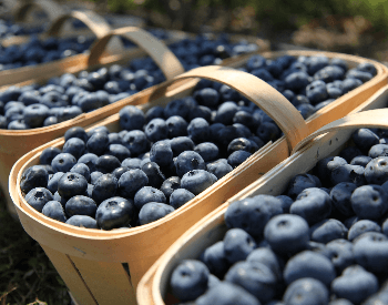 A picture of a basket that is full of blueberries