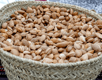 A picture of a basket of freshly harvested almonds