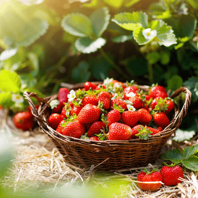 A Picture of a Basket of Strawberries