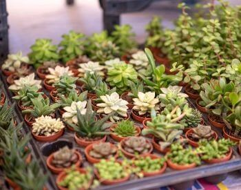 A picture of a bunch of cactus house plants