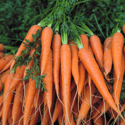 A Picture of Carrots