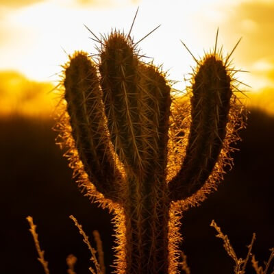A Picture of a Cactus