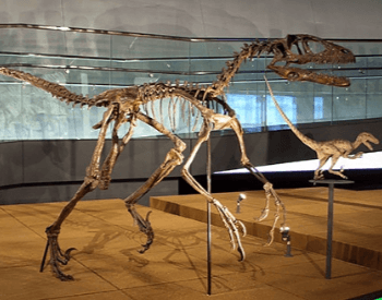 A picture of a Deinonychus museum exhibit