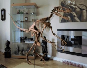 A picture of a Deinonychus skeleton replica