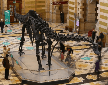 A photo of a Diplodocus fossil, a dinosaur that lived during the Late Jurassic Period