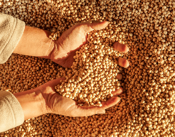 A picture of a farmer holding soybeans