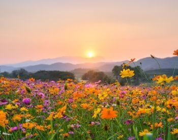 A picture of flowers blooming