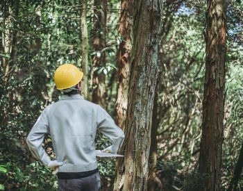 A picture of a forester examing trees in the woods