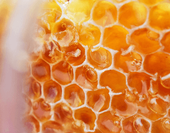 A close-up picture of a honey comb