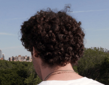 A picture of hair on the human head