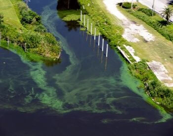 A picture of a lake with algae