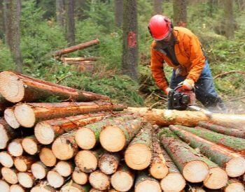 A picture of a lumberjack cutting up harvested timber