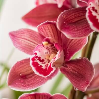A Picture of an Orchid