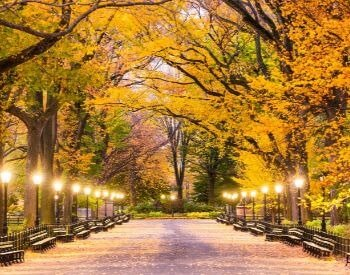 A picture of a pathway going through Central Park