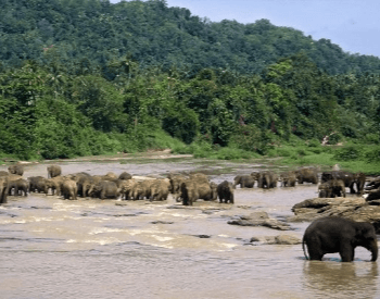 A photo of an large herd of elephants.