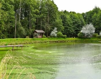 A picture of a pond with algae