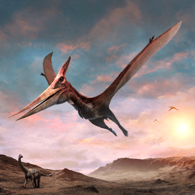 A Picture of a Pteranodon
