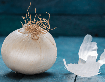 A picture of a white onion