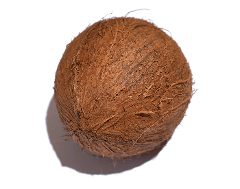 A picture of a whole coconut