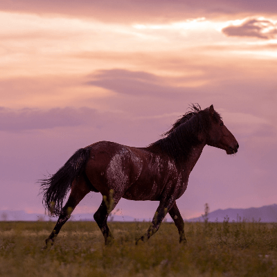 A Picture of a Mustang Horse