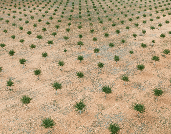 An aerial picture of planted almond trees