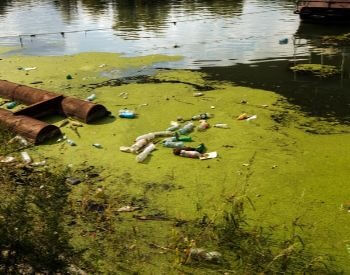 A picture of water pollution causing an algae bloom