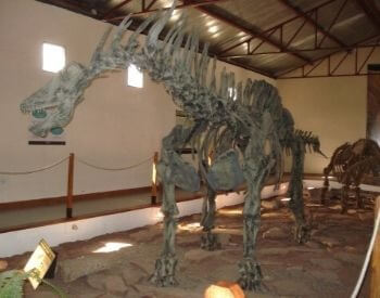 A picture of an Amargasaurus exhibit in a museum