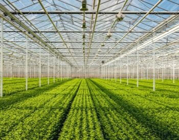 A picture of an industrial greenhouse