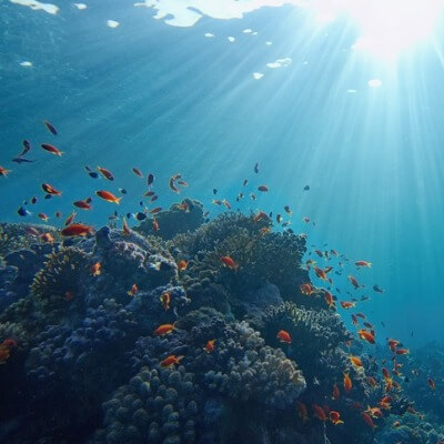 A picture of a Coral Reefs