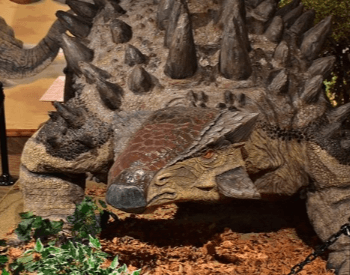 The ankylosaurus exhibit at Glendive Dinosaur and Fossil Museum