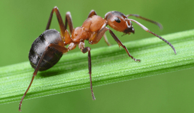 Ant Facts for Kids