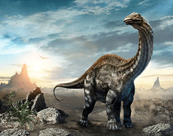 An illustration of the Apatosaurus, which was a Sauropoda dinosaur