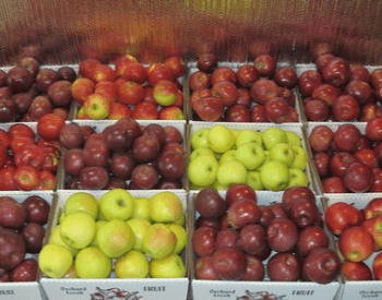 A picture of apples in the store