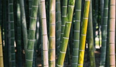 Bamboo Facts for Kids