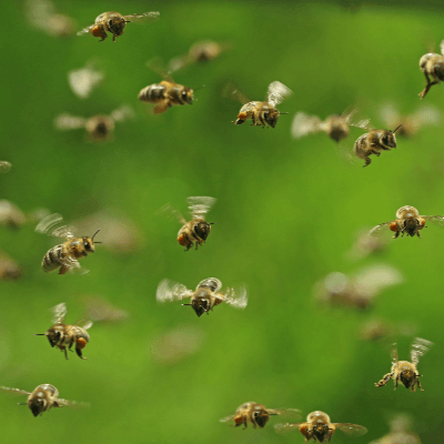 A Picture of Bees