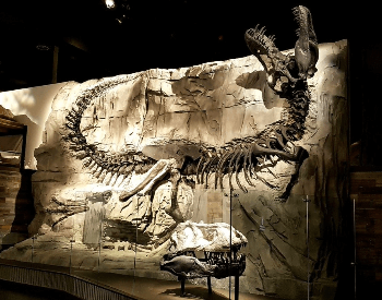 Black Beauty Tyrannosaurus Rex Skeleton At Royal Tyrrell Museum