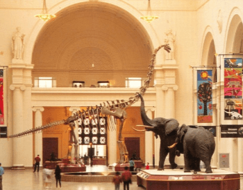 Brachiosaurus altithorax skeleton at the Chicago Field Museum