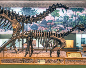 A photo of the Brontosaurus in the Yale Peabody Museum's Great Hall.