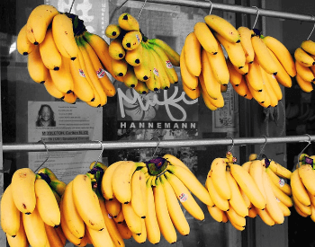 A picture of a few bunches of yellow bananas