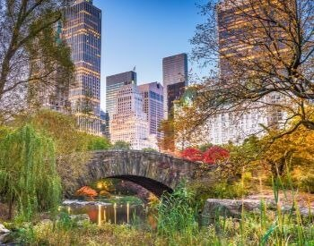 A picture of Central Park during the summer