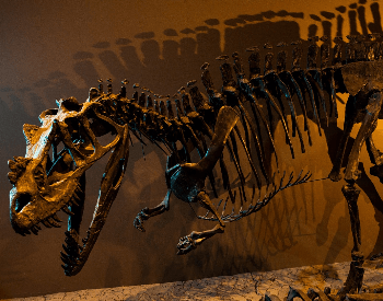 A picture of a Ceratosaurus exhibit in a museum