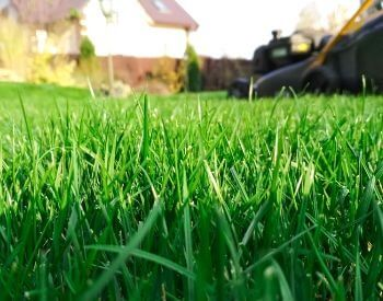 A close-up picture of grass blades