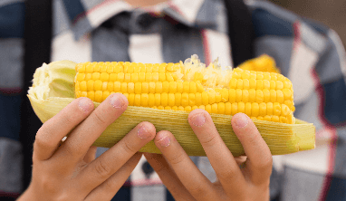 Corn Facts for Kids