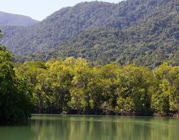 A picture of the Daintree Rainforest in Australia