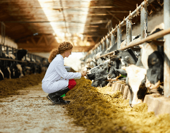 A picture of a dairy farm with dairy cows