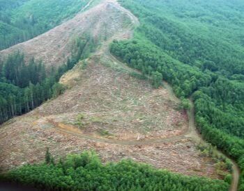 A picture of a forest being cut down by humans