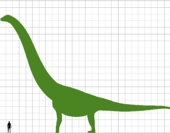 A diagram comparing a human to the Argentinosaurus.