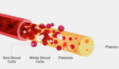 A diagram showing all the different components of human blood