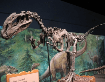 A photo of a Dilophosaurus exhibit at an unknown museum.
